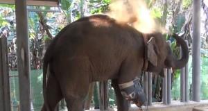 Elefante e protesi
