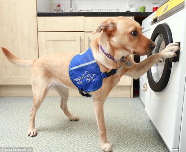 Service-dogs
